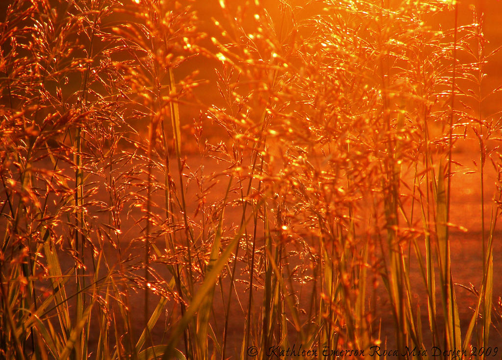 Fields of Golden Grain by rocamiadesign