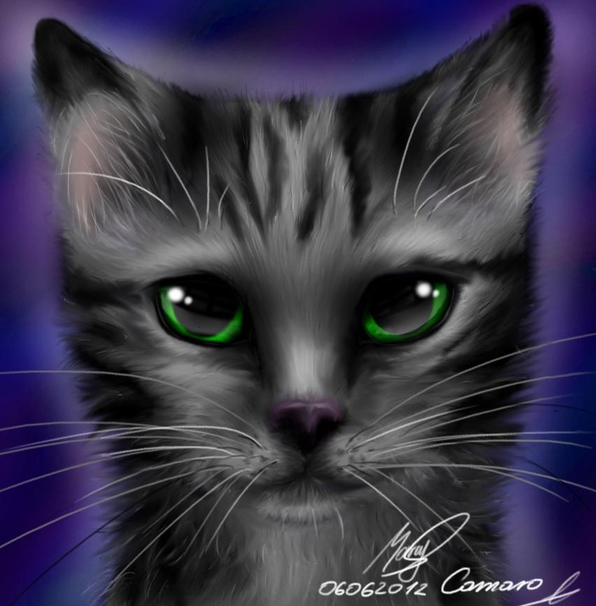 Kitten. by camaro1