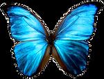 Butterfly Precut