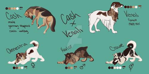 cash ~ venali litter