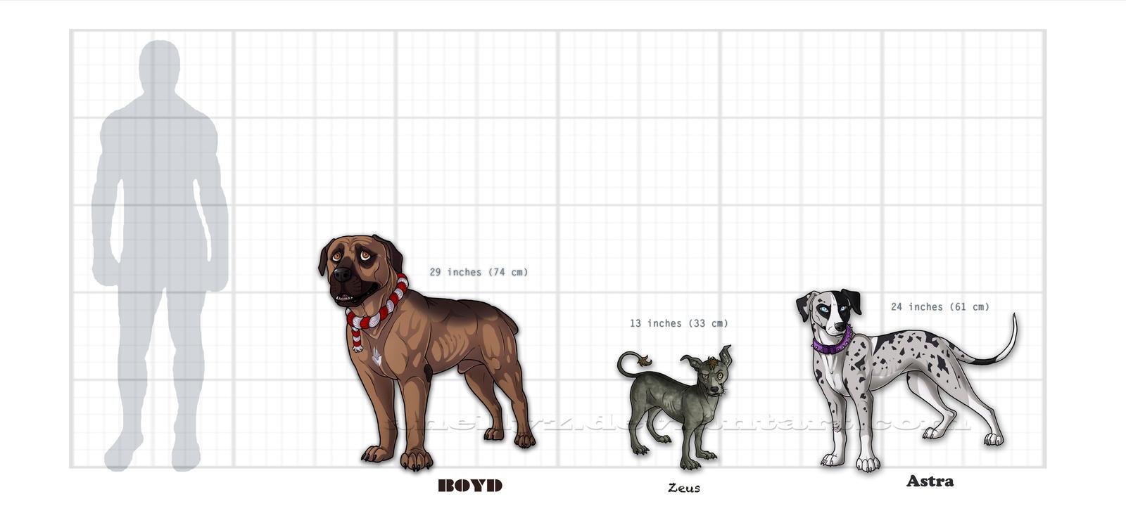 Boyd Zeus Astra Size Comparison By Ionekta On Deviantart