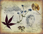 Diary of a Botanist - Antique