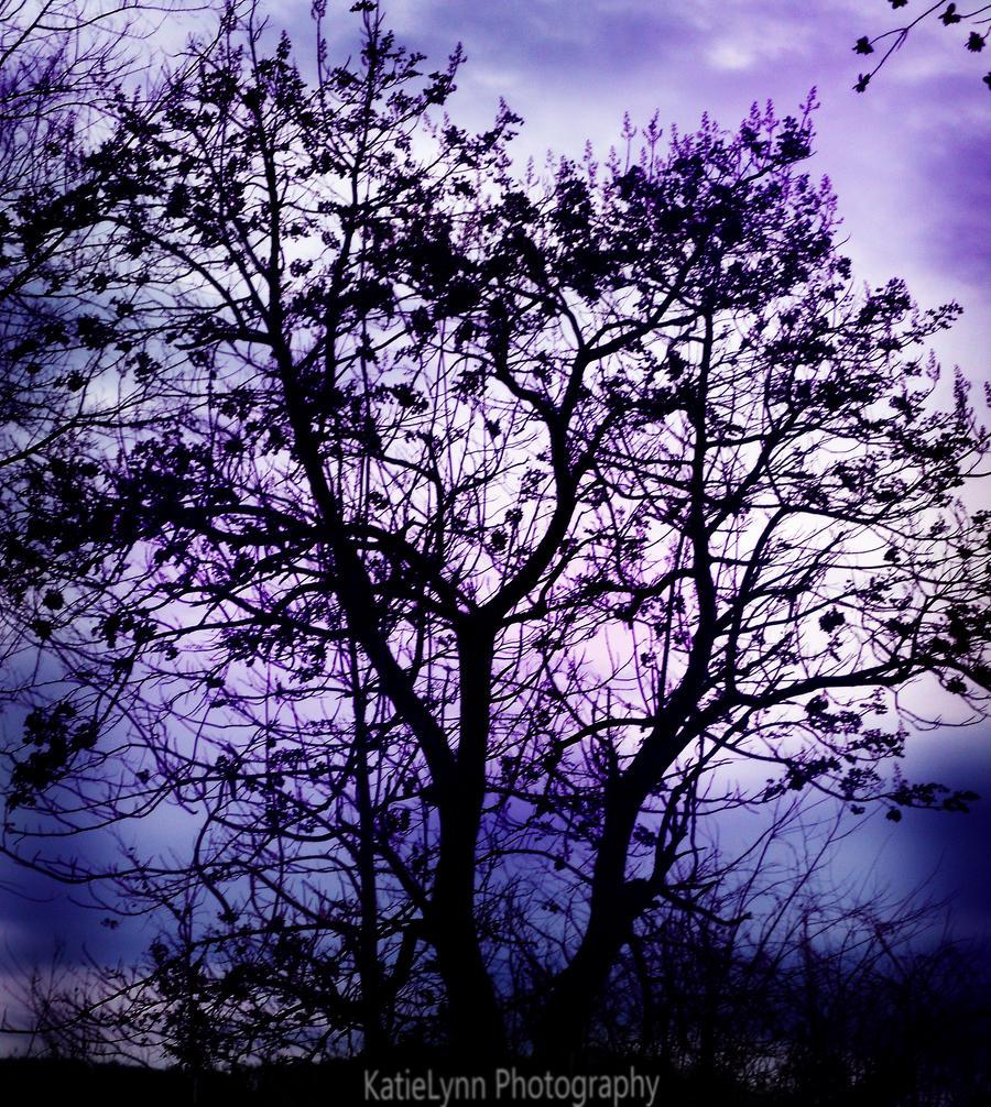 VIOLET - Page 2 Purple_sky_by_katieelynnt-d3fcu17