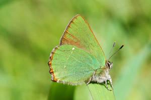 Green on green by AnjaSchlegelmilch