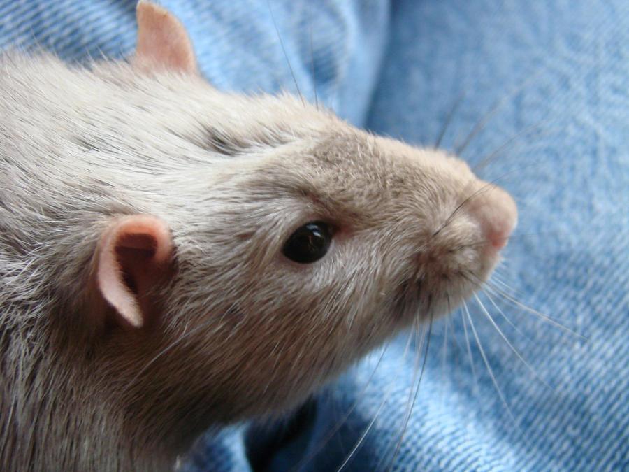 Timmy in Profile