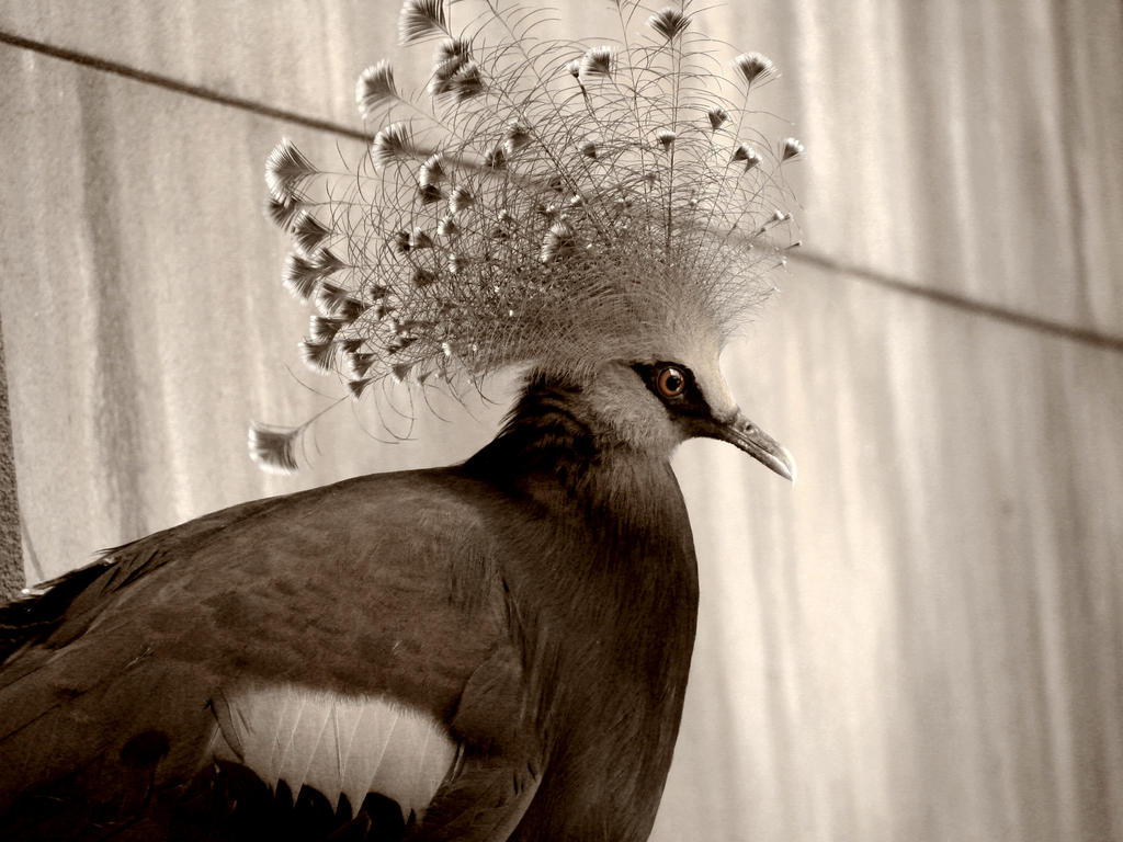 Crowned Glory by roamingtigress