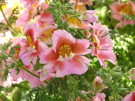 Pinkness in Springtime by roamingtigress