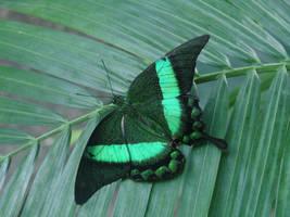 Green on Green by roamingtigress