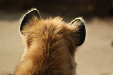 Hyena Ears by roamingtigress