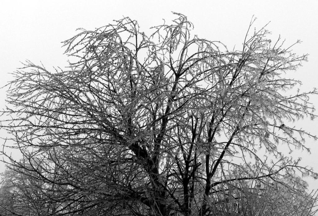 The Ice Tree by roamingtigress