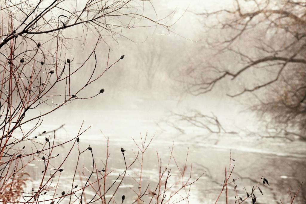 Across the Misty Pond by roamingtigress