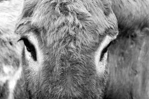 Eye of The Donkey