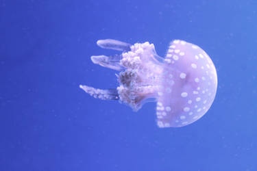 Just feeling a little jelly by roamingtigress