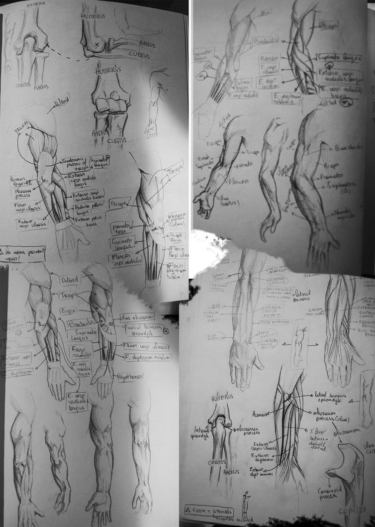 Anatomy-studies-17-10-14 by ThomasRome