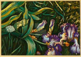 L'iris couche
