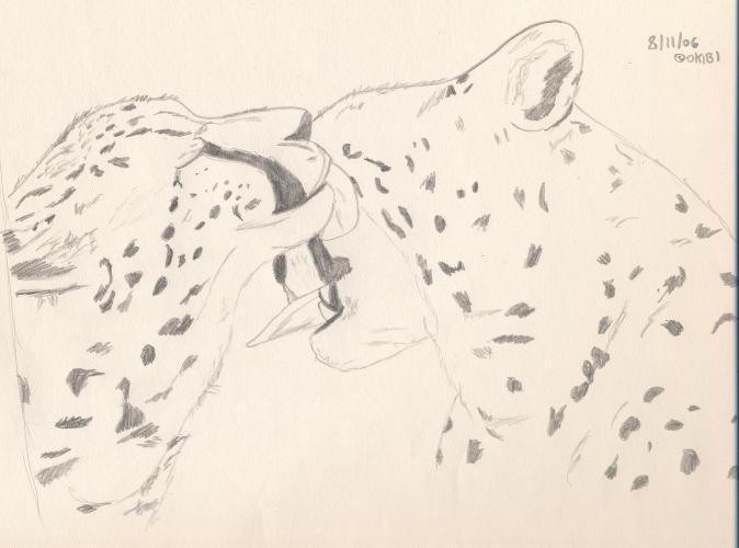 Cheetah Kisses