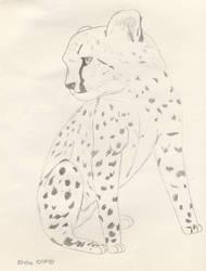 Lil' Cheetah