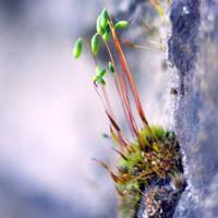 little trees by d0nr0n