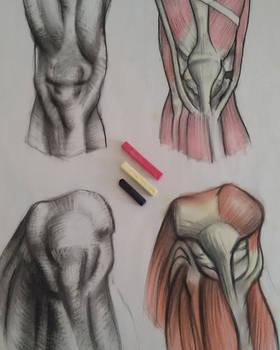 Anatomy_study_JAM