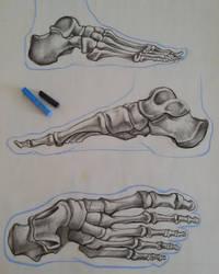 Anatomy_study03_JAM