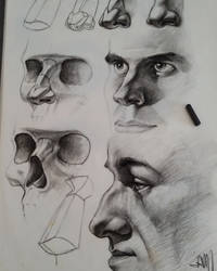 Charcoal Nose study