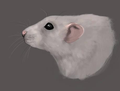 Dumbo Rattie
