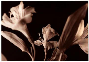Blurred Blooms by digitalblue