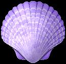 [F2U] Seashell