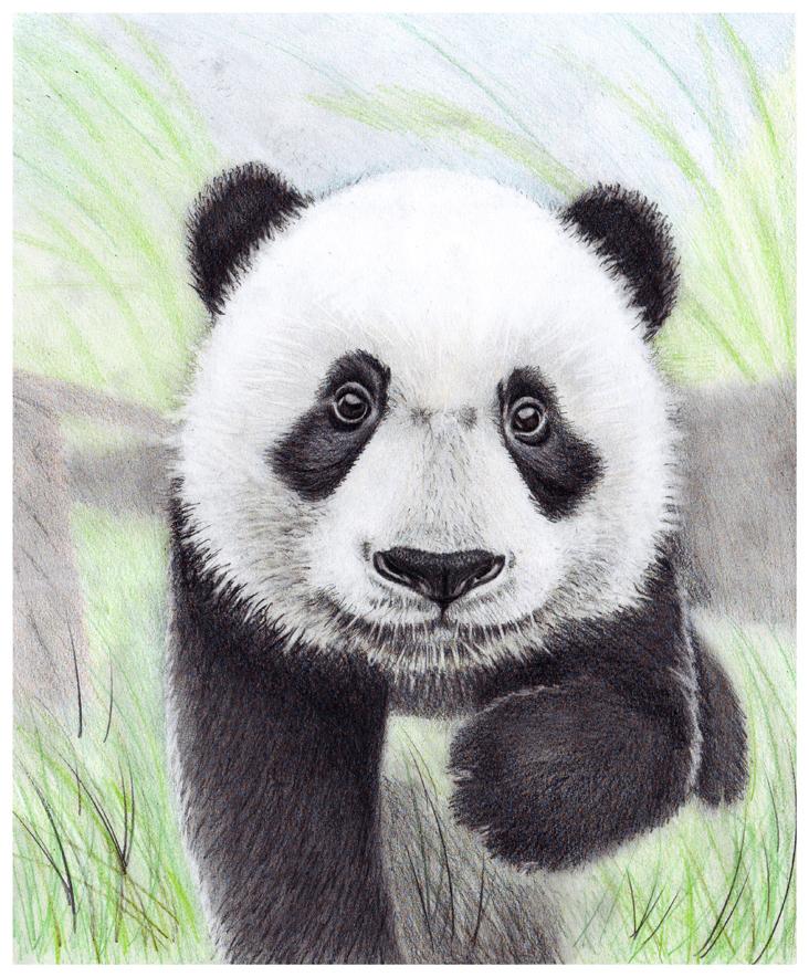 Cute panda baby drawing - photo#18