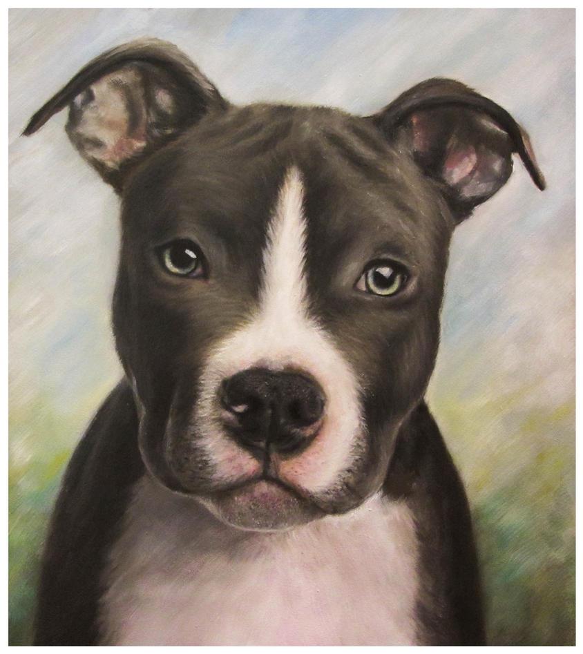 Puppy by szog88
