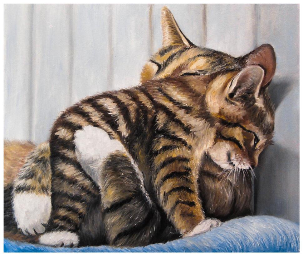 cats by szog88