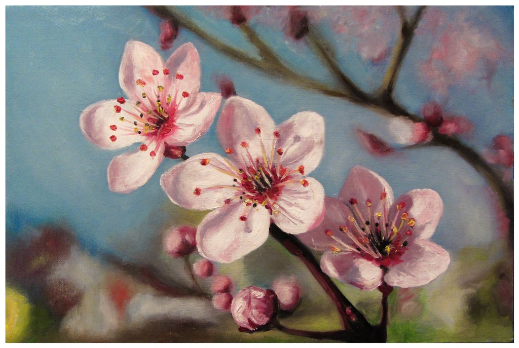 Cherry blossom by szog88