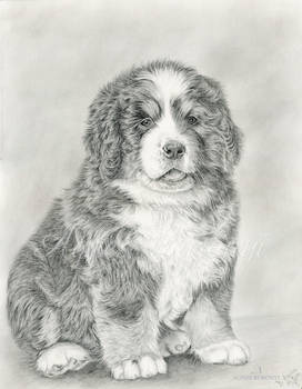 Luna - puppy drawing