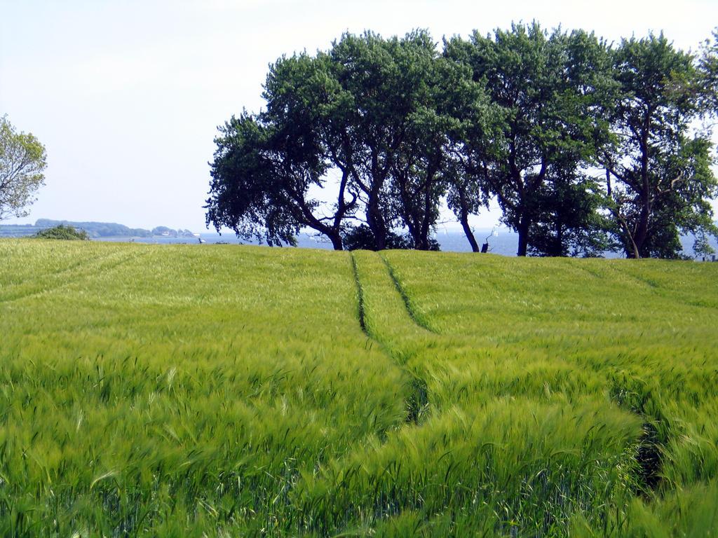 Barley Field in Holnis by Minoltaurus