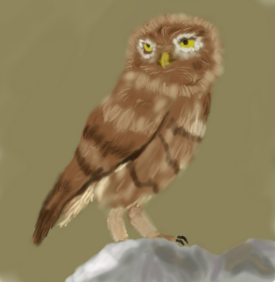 I drew an owl :3 by salk32
