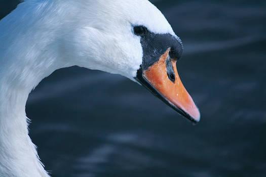 Broads: Swan