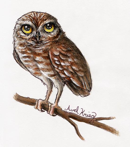 Burrowing Owl by TumblingTortoises