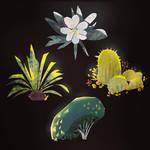 Plant Studies 01