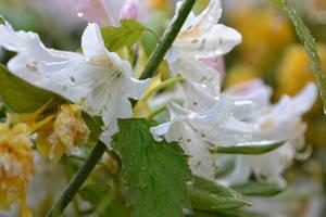 Garden flowers. by fut-greve