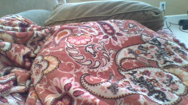 sleepy cat under a blanket