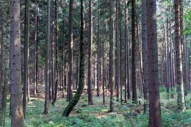 Forest Stock by ppan09-1