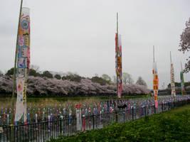 Koi nobori and sakura No.5