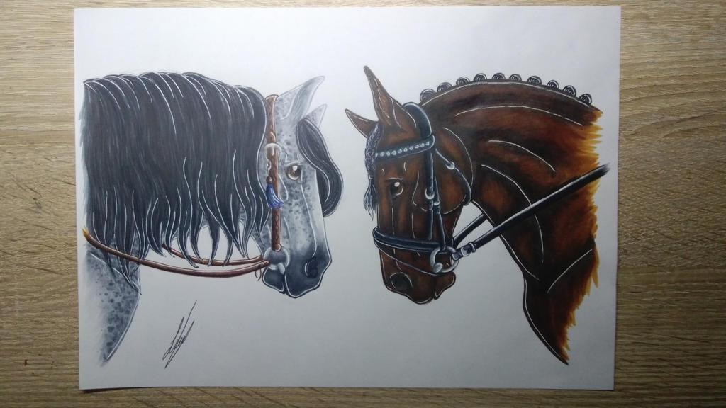 Western vs. Dressage + Speedpaint by LisaDrawz on DeviantArt