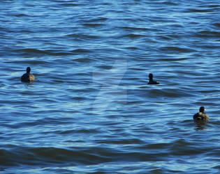 The Three Ducks by PolyatomicStudios
