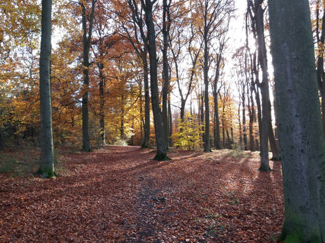In the autumn beechwoods 01