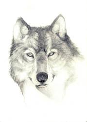 Wolf 3 by jOy--jOy