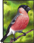 Eurasian bullfinch ATC by CrazyEdzia