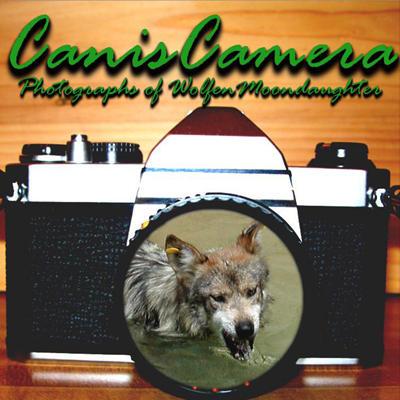 CanisCamera's Profile Picture