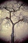 Trees painted White - II