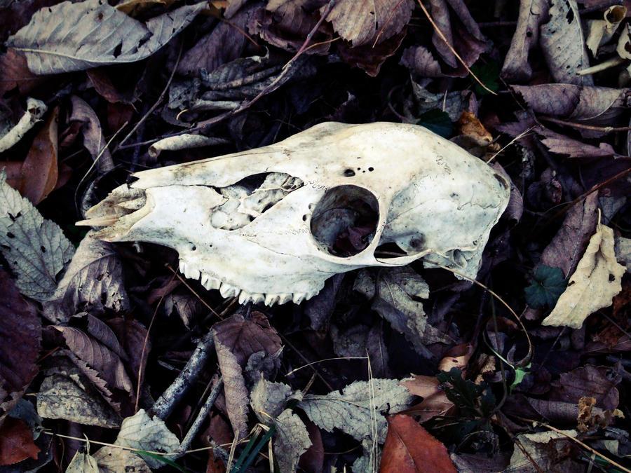 Deathbed by SilverWolf7444